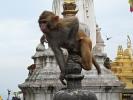 Affe beim buddhistischen Stupa Swayambunath